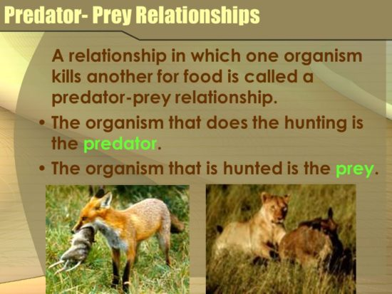 Narcissist Predators Seeking Prey